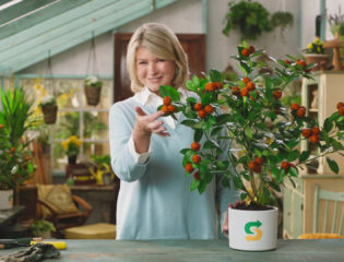 Why Martha Stewart Chose to Embrace a Plant-Based Diet